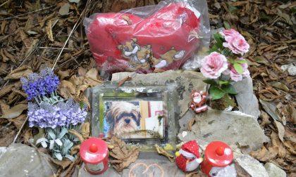 Cimitero per animali, la proposta dei Cinque Stelle