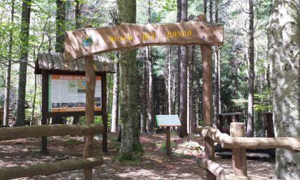 Giornata dei sentieri liguri: appuntamento anche al Parco dell'Aveto