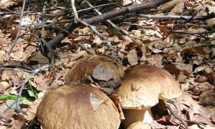 Autunno, tempo di funghi nel Parco dell'Aveto