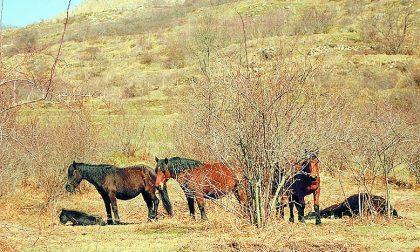 Borzonasca, horsewatching sulle tracce dei cavalli selvaggi
