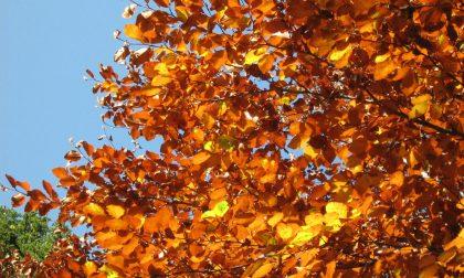I colori dell'autunno nel Parco dell'Aveto