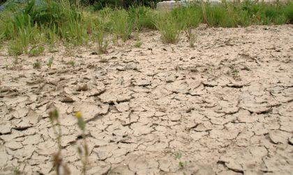 Emergenza siccità, Mai: «Entro fine mese chiederemo lo stato di calamità naturale»