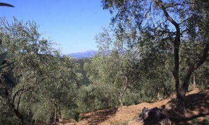 La camminata tra gli olivi