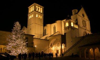 La Regione dona ad Assisi un abete dell'Aveto per le festività natalizie