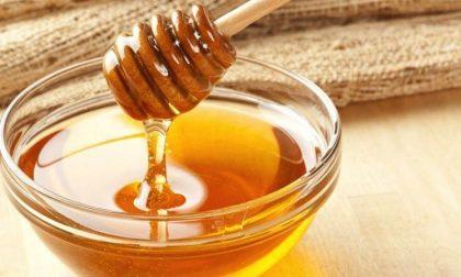 Concorso Mieli dei Parchi della Liguria, 81 i campioni di miele