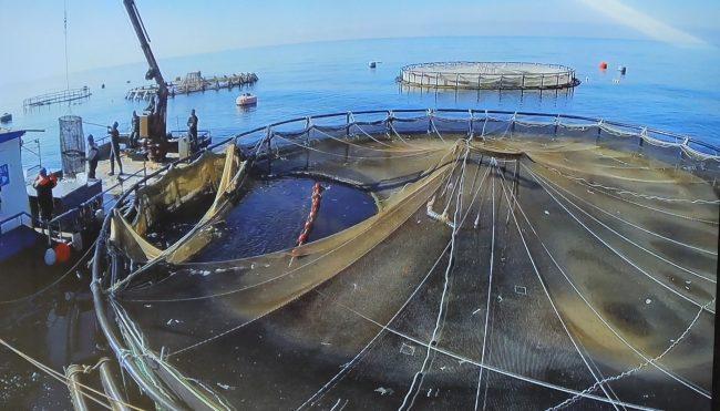 Amianto e rifiuti pericolosi, sequestrato un capannone: altri guai per l'itticoltura lavagnese