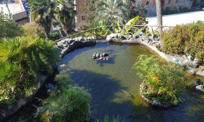 Troppe tartarughe a Villa Rocca: molte sono abbandonate