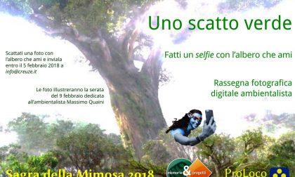 """Sagra della mimosa, tra le manifestazioni collaterali anche i """"selfie con gli alberi"""""""