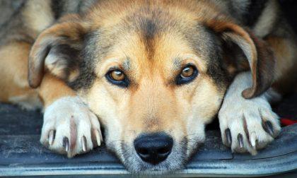 La passeggiata col cane può aumentare il rischio contagio? No, non c'è nessuna correlazione diretta