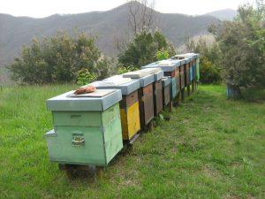 Il Parco dell&#8217&#x3B;Aveto vincitore del concorso &#8220&#x3B;Miele dei Parchi della Liguria&#8221&#x3B;