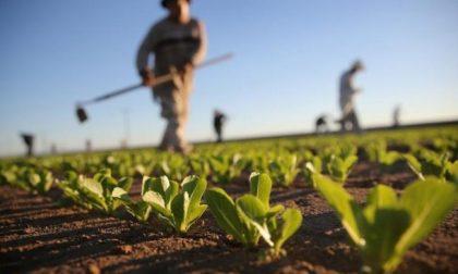 Crisi del mercato del lavoro: e in Liguria i giovani tornano all'agricoltura