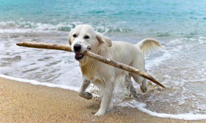 Sindaco di Zoagli vieta cani in spiaggia e passeggiata a mare, Enpa deposita ricorso al Tar