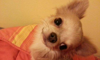 «Maltratta i suoi cani, intervenite»: ma la denuncia dell'ex era inventata