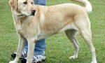 Prende un nuovo cucciolo: aggredita dai suoi 4 cani