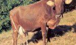 Grande fiera di merci e bestiame a Ferriere