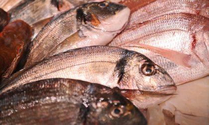 Con +8% pesce straniero, serve data di pesca per garantire massima tracciabilità
