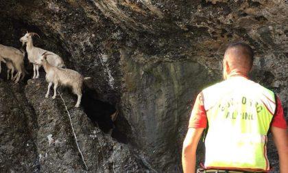 Soccorritori mettono in salvo sei capre e due piccoli bloccati da tre giorni in una grotta