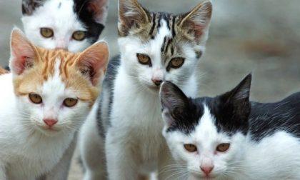 Chiavari, morti sospette di gatti al Santuario delle Grazie