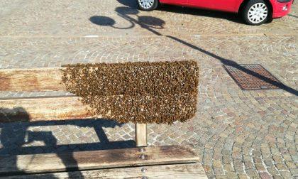 Sciame di api in una panchina sul lungomare di Chiavari