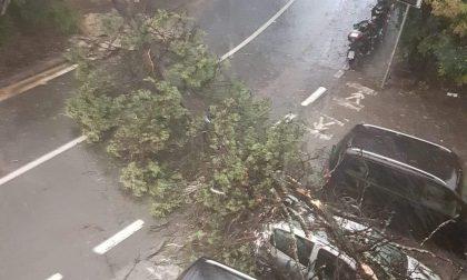Albero crolla sulla strada per Ruta