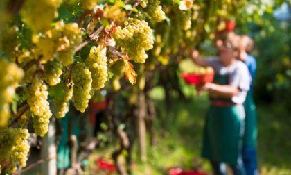 Un ottimo autunno per olio, funghi, castagne e vino in Liguria