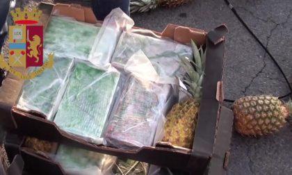 """Droga nella casse di ananas dalla Costa Rica: tra i membri del """"cartello"""" c'è anche un fontanino"""