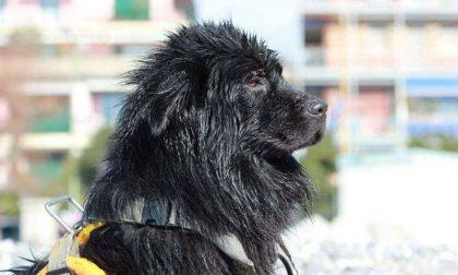 Addio Pino, cane dalla testa dura ma dal cuore d'oro