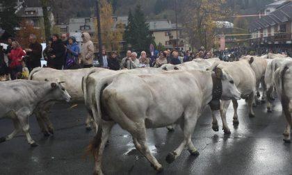 Boitano: «La Transumanza importante risorsa turistica per l'intera Val d'Aveto»