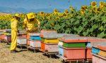 Finanziamenti regionali per l'apicoltura ligure