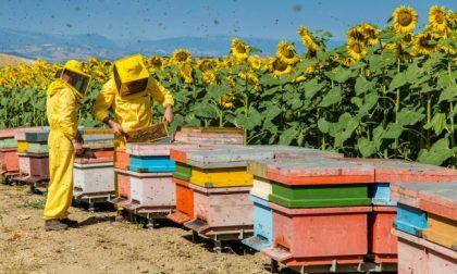 Giornata mondiale della biodiversità e delle api al Parco dell'Aveto