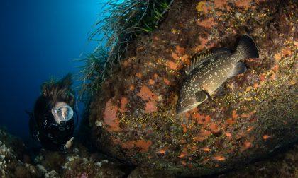 Concorso di fotografia subacquea, ecco lo scatto vincitore