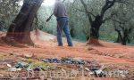"""""""Gli olivicoltori liguri possono proseguire la loro attività"""""""