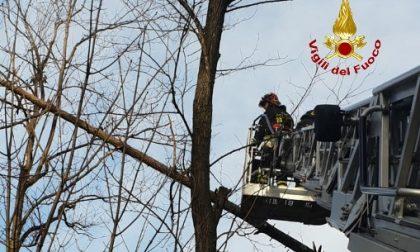 Borzonasca, albero abbattuto sulla linea elettrica