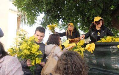 Arriva la sagra della mimosa a Pieve Ligure