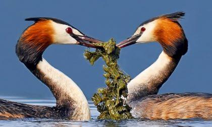 Ripartono gli eventi della Lipu: si riparte con il corteggiamento negli uccelli selvatici