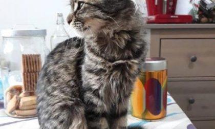Procaccini alla ricerca del gatto smarrito