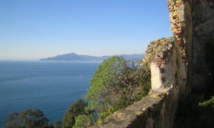 Oliveti aperti in Liguria