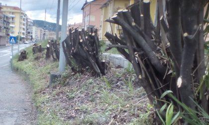 Lavagna: tagliati gli alberi lungo la ferrovia