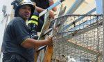 I Vigili del Fuoco salvano un gabbiano in difficoltà