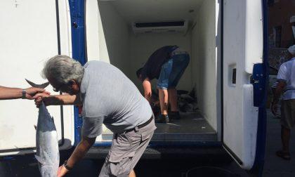 Tre tonnellate di Alleterati nelle reti della Cooperativa Pescatori