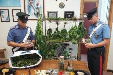 Marijuana, sequestrate 65 piantine ad Avegno