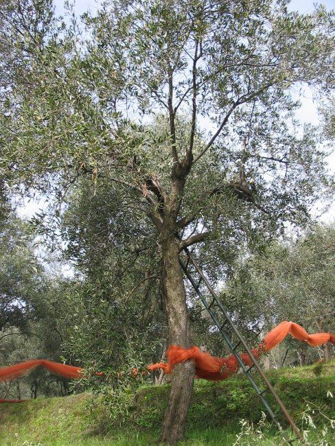 """""""Che albero sei?"""", attività di educazione ambientale a Moneglia"""