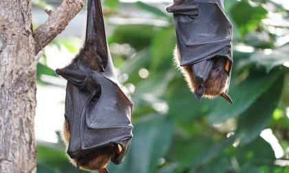 Rezzoaglio, la notte dei pipistrelli