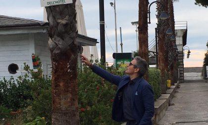 Potatura degli alberi in centro per dare sicurezza e decoro alla città