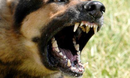 Sorpresi mentre rubano una bici, il loro cane aggredisce un carabiniere