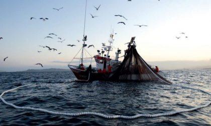 """Pesca: """"Il nostro mare sta cambiando a causa del cambiamento climatico"""""""