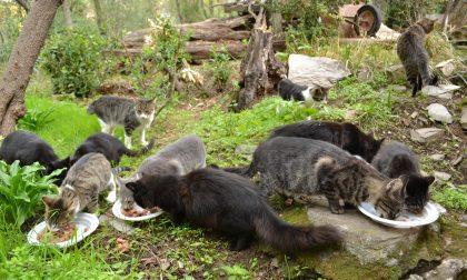 Colonie feline, il lavoro dei volontari non si è mai fermato