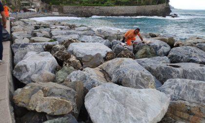 Pulizia di spiagge e scogliere a Recco