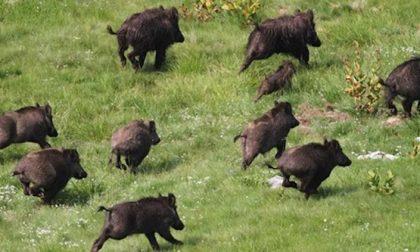 Denuncia con foto e video dei danni causati dagli animali selvatici: l'iniziativa CIA Liguri