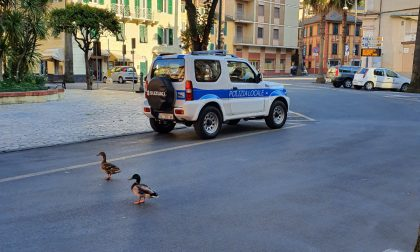 Santa Margherita Ligure, il bilancio dell'attività della Polizia Locale